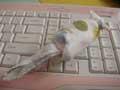 手帕老鼠,童年手工手折绢叠老鼠缩略图